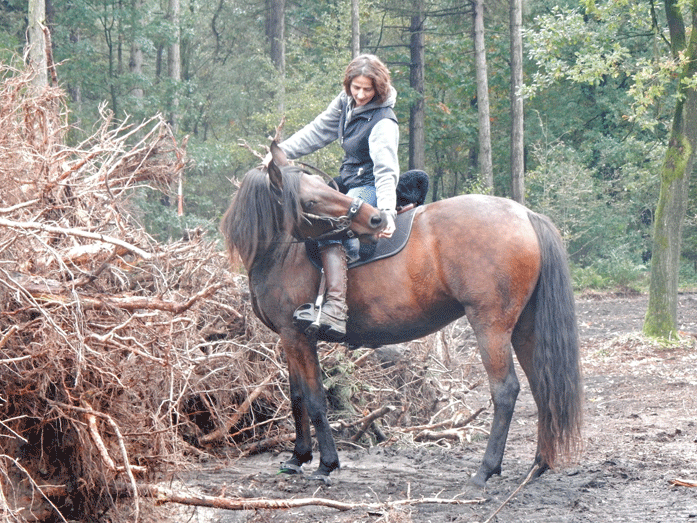 gerooide bomen markeren natuurbegraafplaats de Maashorst