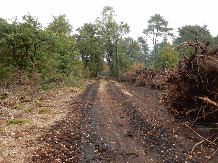 Duizenden bomen en al het dode hout zijn verwijderd inclusief het wortelgestel. Daarmee is het eigen inrichtingsplan niet gevolgd en de Flora en Faunawet overtreden.