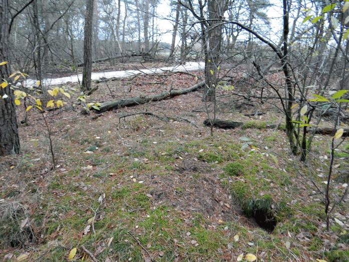 Dassenburcht op natuurbegraafplaats De Maashorst