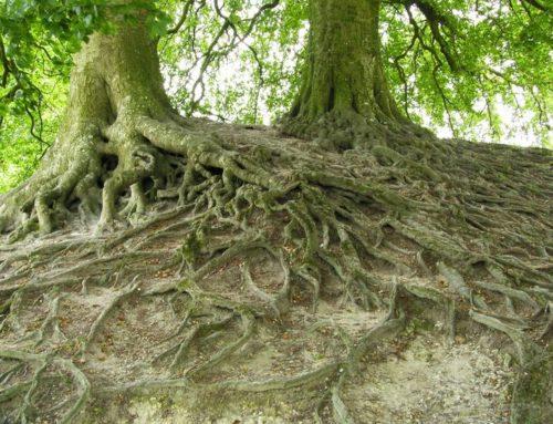 Natuurgraven zijn een ramp voor oude bosbodems